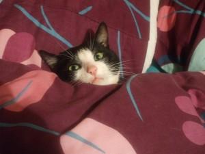 sammy stealing my bed